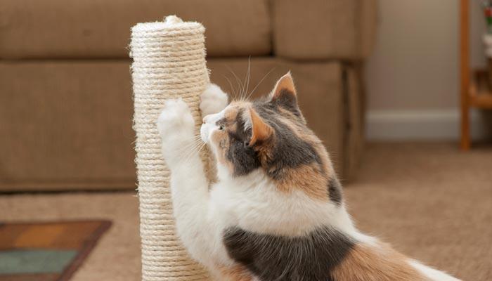 Come insegnare ad usare i tiragraffi al gatto e salvare il divano