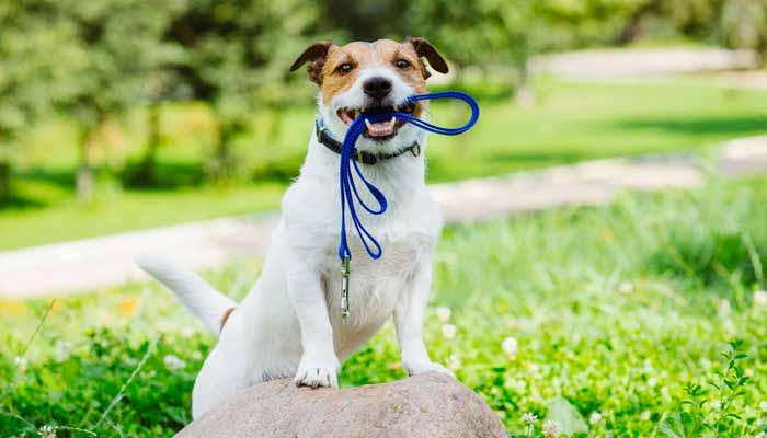 Come scegliere il guinzaglio per cane perfetto