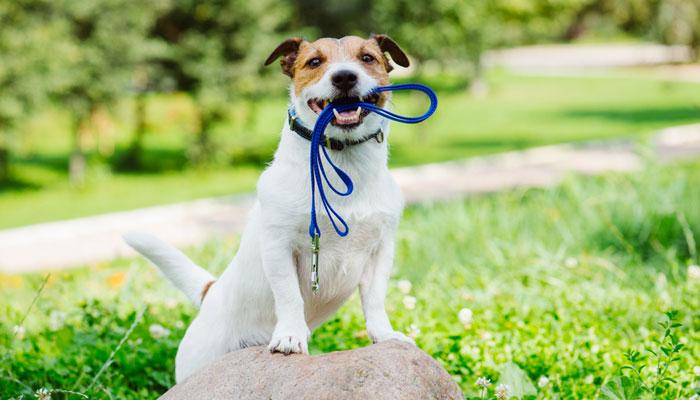 Guinzaglio per cane: come scegliere il migliore