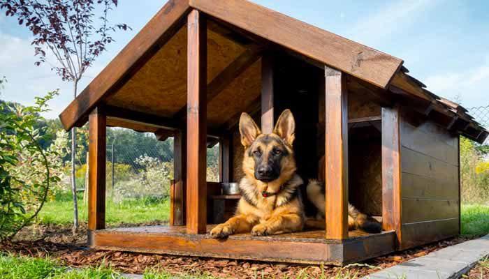 Come scegliere la cuccia del cane da mettere in giardino