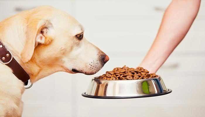 Crocchette per cane economiche ma buone