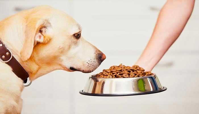 Crocchette per cani economiche ma buone