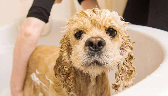 Lavare il cane e lo schampoo da utilizzare