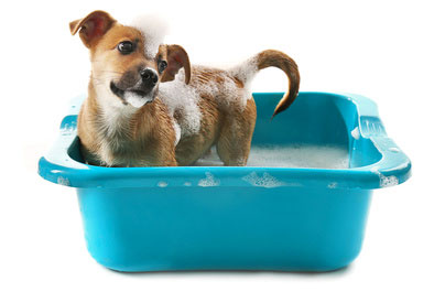 Lavare il cane nella tinozza