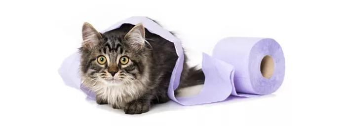 Lettiera per gatto cercasi come scegliere quella giusta