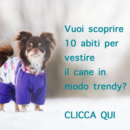 Scoprire 10 abiti per vestire il cane in modo trendy? Clicca qui
