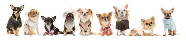 https://www.perpets.it/collari-per-cani-come-orientarsi-nella-scelta/