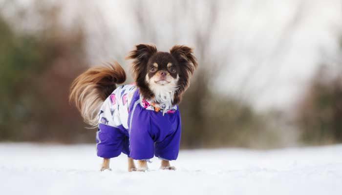 Vestire il cane in modo trendy