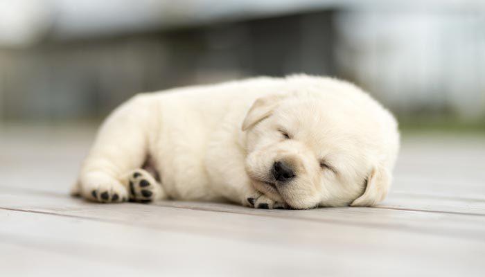 Cosa comprare per l arrivo di un cucciolo di cane