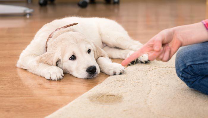 Insegnare al cucciolo a non fare i bisogni in casa