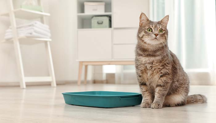 Migliore lettiera per gatti aglomerante ed ecologica
