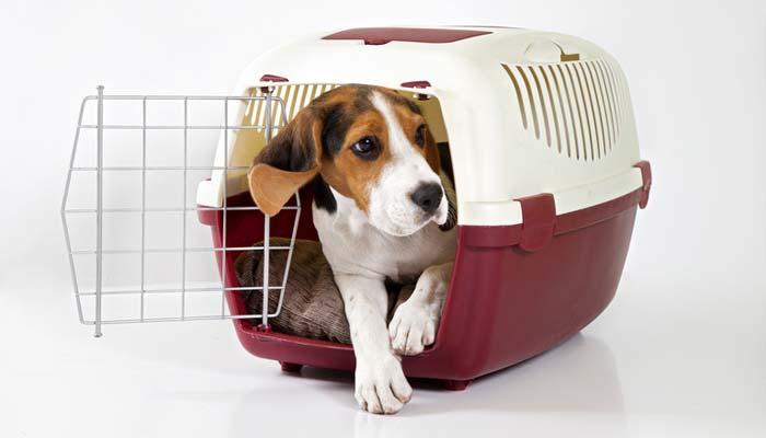 Trasportino per cani economico ma buono