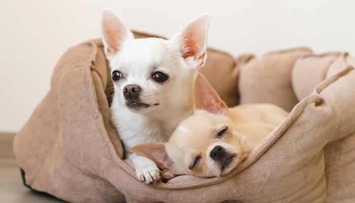 Disinfettare la Cuccia del cane in modo efficace