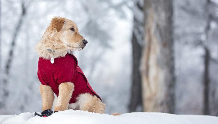 Cappottini per cani: i migliori modelli da acquistare