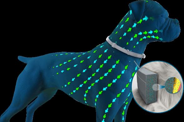 Antiparassitari per cani contro le zecche Seresto funzionamento