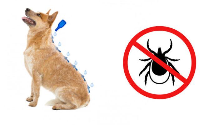 Applicazione Antiparassitario per cani contro le zecche Advantix