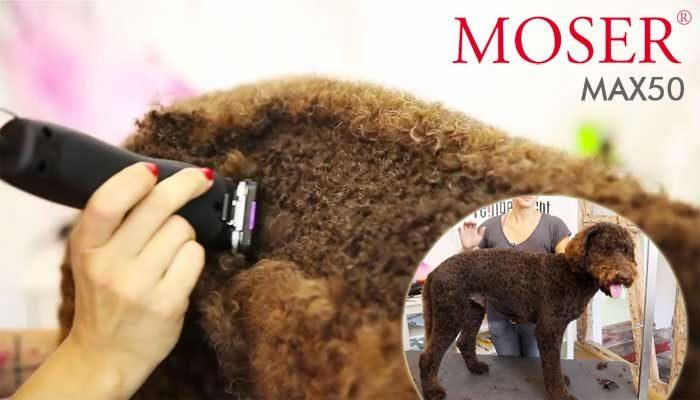 Recensione Moser Max 50