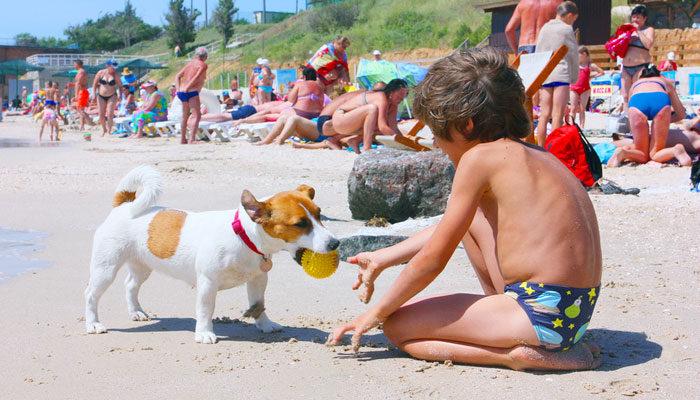 Cani in spiaggia libera comportamento diritti e doveri