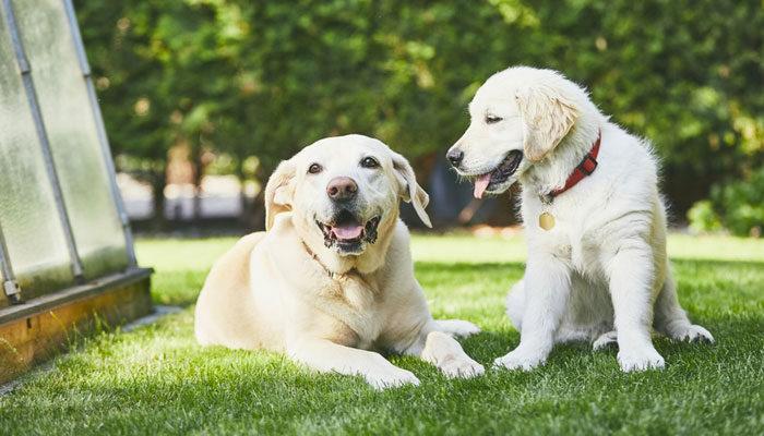 Come calcolare eta del cane in anni umani