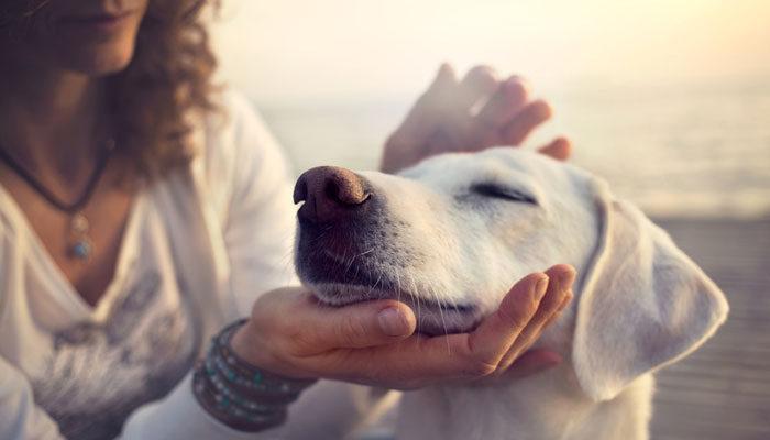 Come capire se il tuo cane ti vuole bene davvero