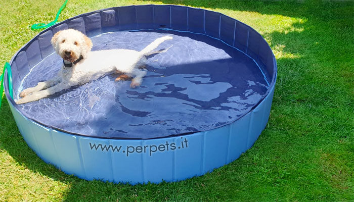 Piscine per cani: migliori modelli con prezzi