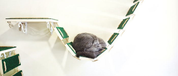 Come abituare il gatto al cane con mensole alla parete