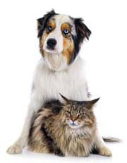 Pulizia e cura Pets