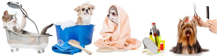 Pulizia e-Cura Animali Domestici - PerPets