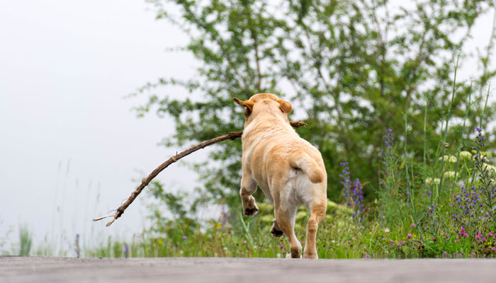 Cane che scappa continuamente