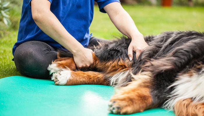 Cane con dolori articolari farmaci e cure naturali