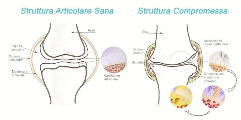 Struttura ossea del cane con dolori articolari