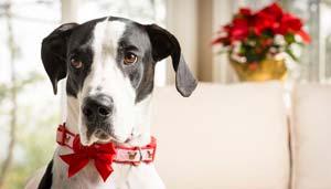 Collari per cani: come orientarsi nella scelta