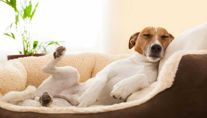 Cucce per cani da interno economiche migliori