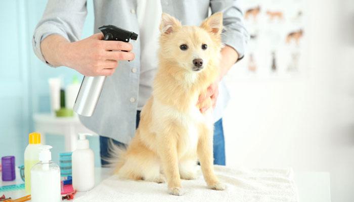 Profumo per cani naturale per profumare il pelo