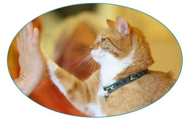 Addestrare il gatto a dare la zampa