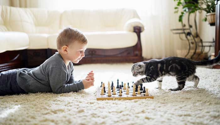 Addestrare il gatto: come fare