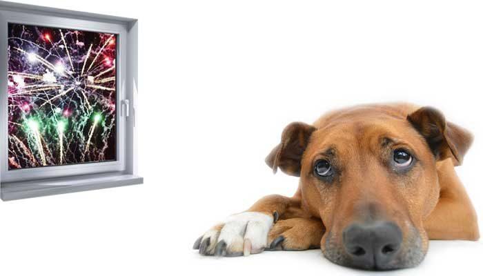 Cane in ansia durante i botti di capodanno