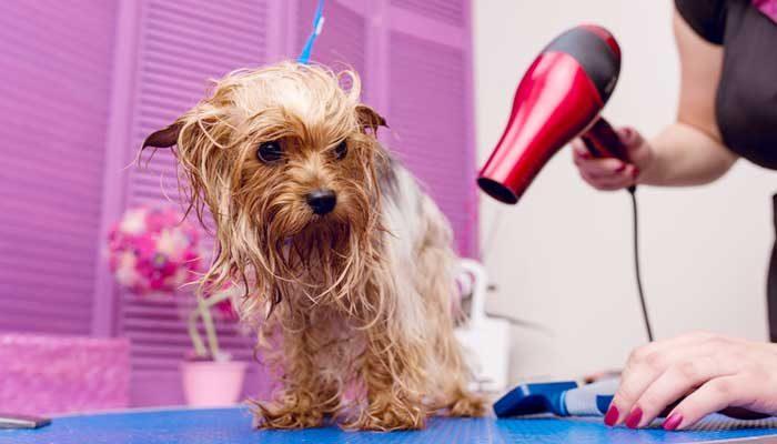 Come asciugare il pelo del cane dopo il bagno