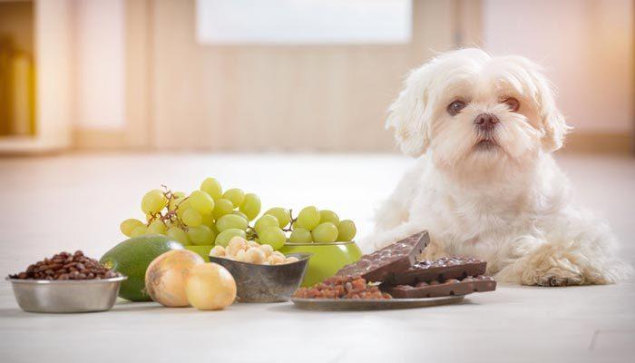 Alimenti tossici e pericolosi per il cane