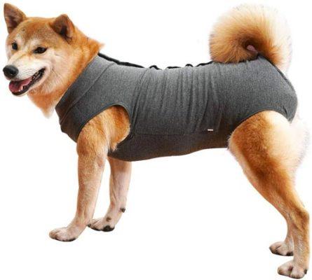Come evitare che il cane si lecchi le ferite con il vestito di recupero