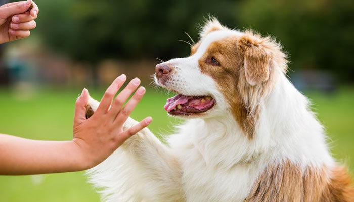 Come addestrare il cane