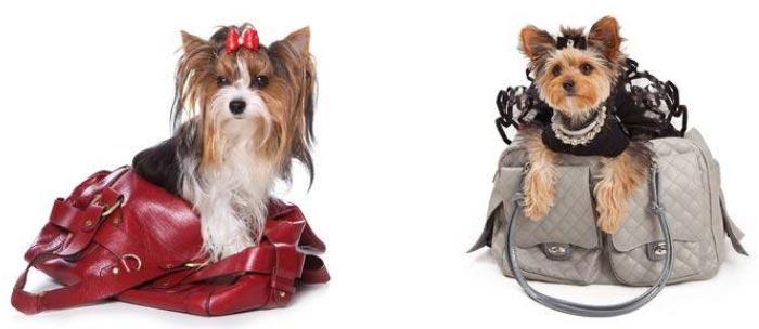 Borse per cani di taglia piccola