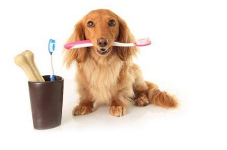 Scopri come rimuovere il tartaro dai denti del cane