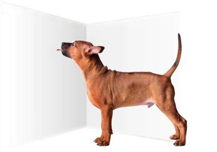 Un cane che lecca il muro di casa