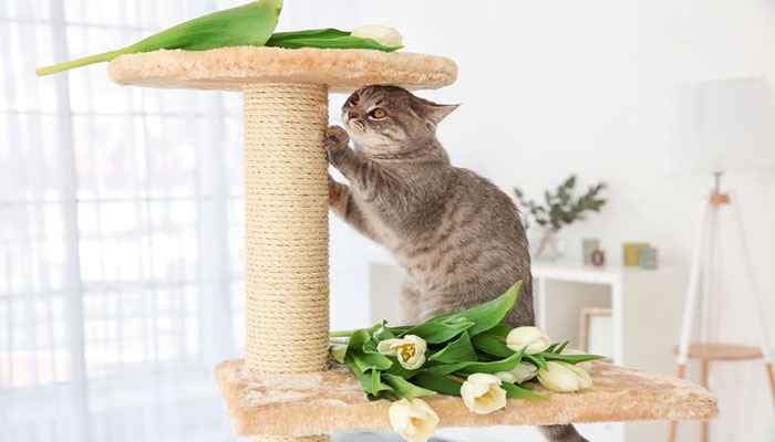 Tiragraffi per gatti: i migliori modelli consigliati