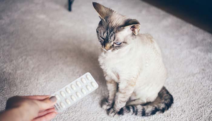 Gatto infestato da Tenia: sintomi, cura e rimedio