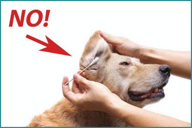 Modo sbagliato di pulire le orecchie al cane