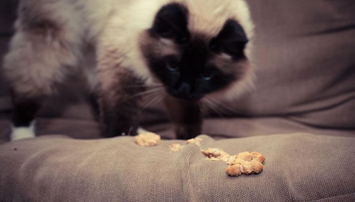Gatto che vomita troppo spesso cure e rimedio