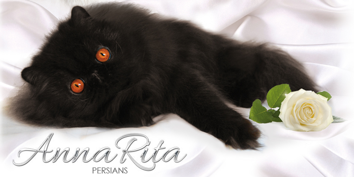 AnnaRita Persian allevamento gatti persiani