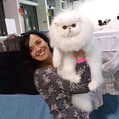 Gatto perisano bianco 2